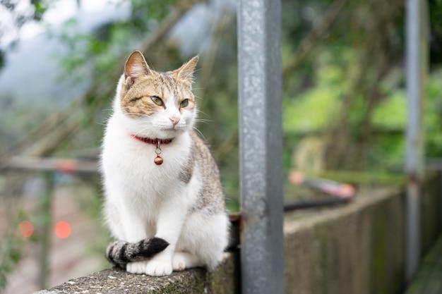 Porträt nette katze, die vor dem haus sitzt