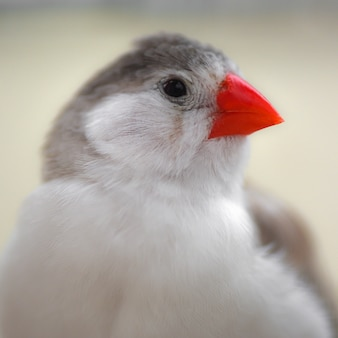 Porträt über einen kleinen süßen singvogel, über den finken