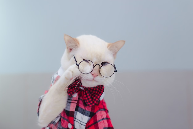 Porträt von tragenden gläsern der weißen katze und von fliege
