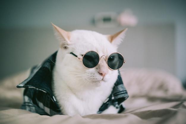 Porträt von tragenden gläsern der weißen katze