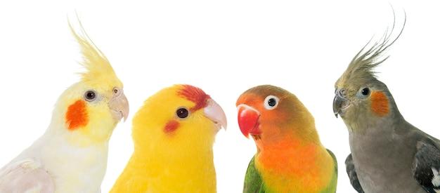 Porträt von vögeln