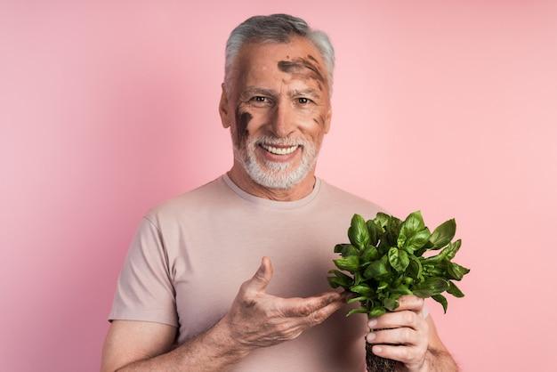 Porträtaufnahme eines glücklichen älteren mannes, der in freizeitkleidung gekleidet ist und basilikum in seiner hand hält und auf isolierter rosa wand steht