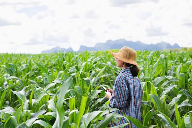 Porträtbauernfrau, die handy hält, das in maisfeldern steht