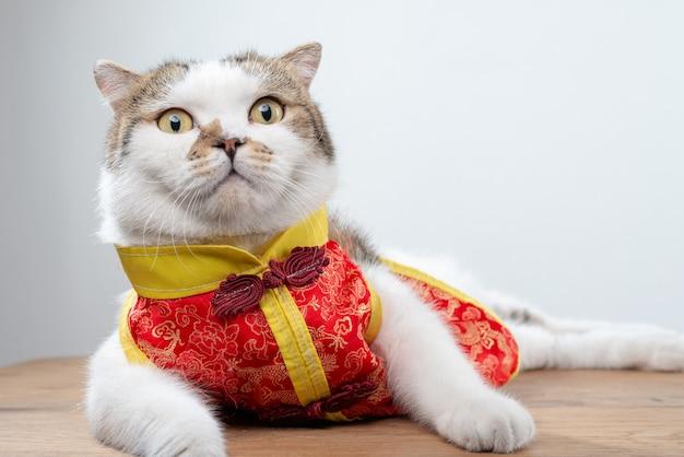 Porträtfoto der netten inländischen kurzhaarkatze in der kleidung der chinesischen art.