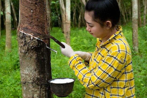 Porträtfrauen, die latex von einem gummibaum aus thailand klopfen
