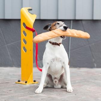 Porträthund, der stangenbrot sitzt und hält