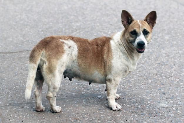 Porträts eines alten heimatlosen hundes