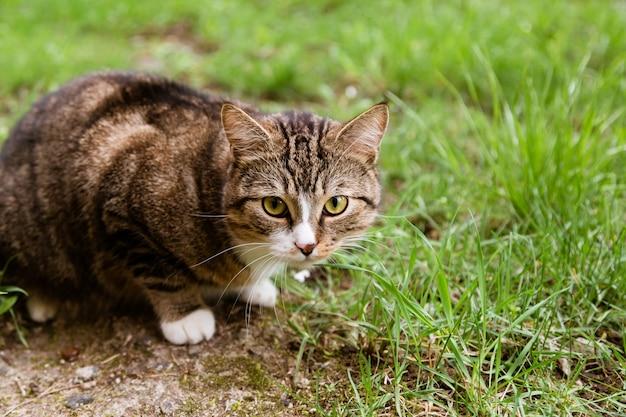 Portrait der katze schauend