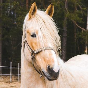 Portrait des schönen pferdes