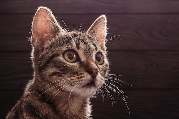 Portrait einer jungen katze