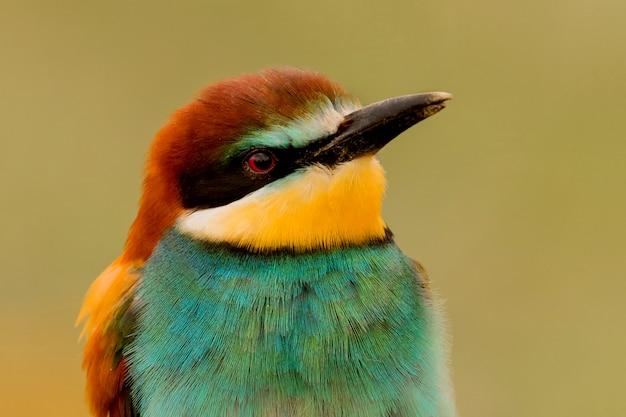Portrait eines bunten vogels