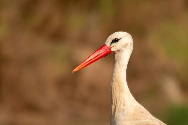Portrait eines eleganten storchs