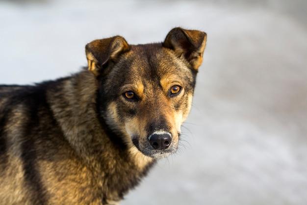 Portrait eines haustierhundes.