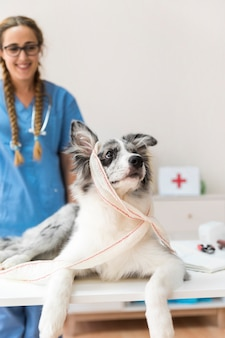 Portrait eines hundes mit dem verband, der weg schaut