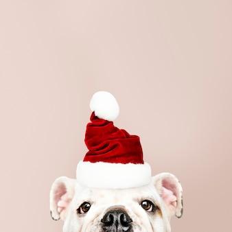 Porträt eines netten Bulldoggewelpen, der einen Sankt-Hut trägt
