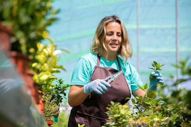 Positiv fokussierte gärtnerin, die sprossen schneidet, mit gartenschere im gewächshaus. frau, die im garten arbeitet und pflanzen in töpfen wächst. gartenberufskonzept