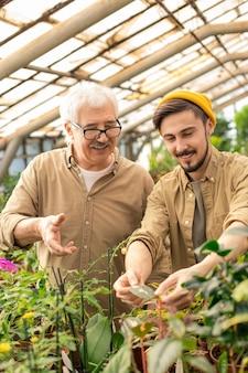 Positive ältere und junge männer arbeiten zusammen, während sie blätter von pflanzen im gewächshaus untersuchen
