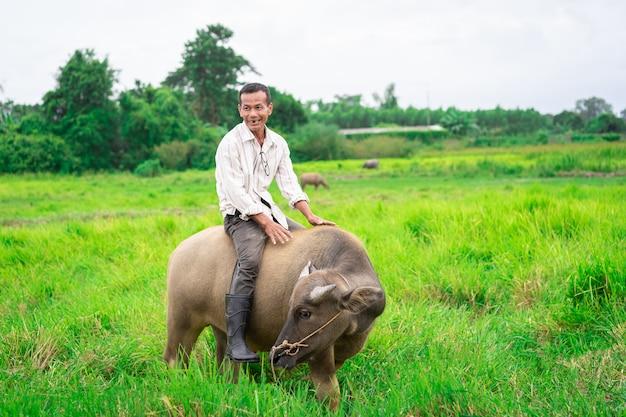 Prachinburi, thailand - 11. august 2019: thailändischer landwirt reitet mit seinem büffel auf grüne rasenfläche in der landschaft