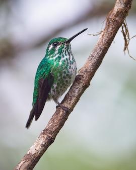 Prächtiger kolibri thront auf dem ast