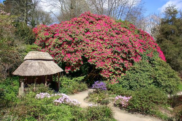 Prächtiger rhododendron