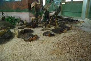 Präparierte tiere in surabaya zoo