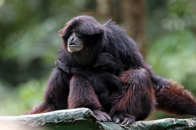 Primat auf einem baum