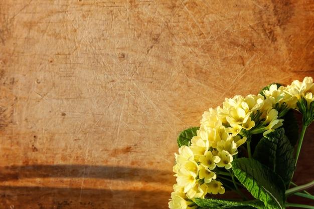 Primel primel mit gelben blüten auf zerkratztem holztisch.