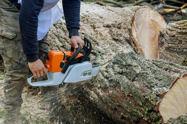 Professionelle stadtwerke, die einen großen baum in der stadt fällen, nachdem ein hurrikansturm bäume einen sturm beschädigt hat