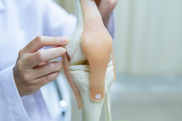 Professioneller doktor zeigte auf bereich des vorbildlichen kniegelenks. medizinisches und orthopädisches konzept