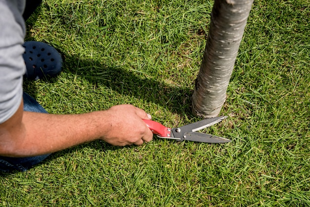 Professioneller gärtner, der ein gras mit einer gartenschere beschneidet