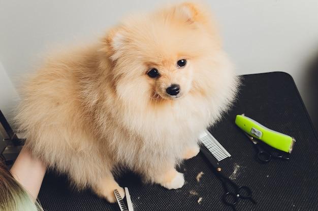 Professioneller groomer, der langhärtige hundepfoten schneidet
