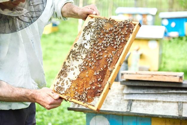 Professioneller imker, der mit bienen arbeitet, die waben von einem bienenstock halten.