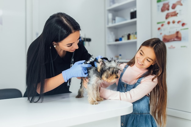 Professioneller tierarzt überprüft eine hunderasse yorkshire terrier mit einem otoskop im tierkrankenhaus