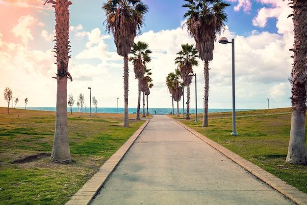 Promenade im midron yaffo park. harry-s-truman-straße. palmenallee