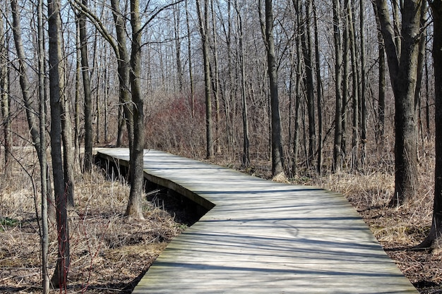 Promenade in einem wald, umgeben von vielen blattlosen hohen bäumen