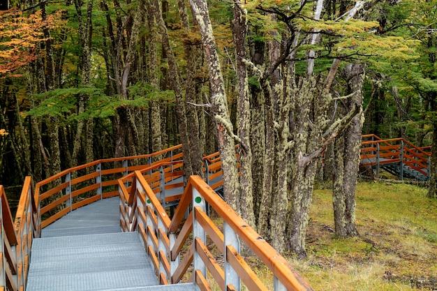 Promenade unter dem laub in nationalpark los glaciares, el calafate, patagonia, argentinien