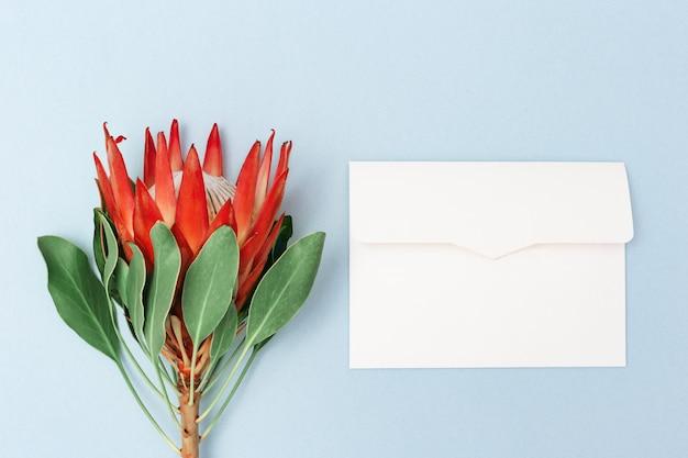Protea blume, große schöne pflanze und rohling für nachricht auf blauer oberfläche.