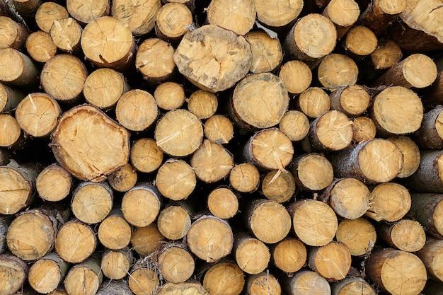 Prozess der abholzung von nadelbäumen