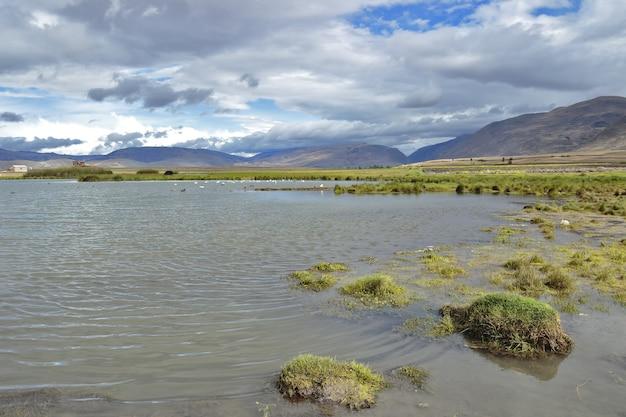 Pucushuclo feuchtgebiet, heimat mit viel artenvielfalt