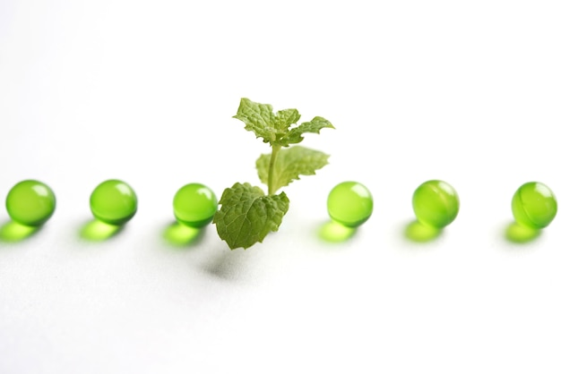 Pudina- oder minztabletten mit frischen blättern. es ist ein ayurvedisches arzneimittel gegen verdauungsstörungen, blähungen und säure