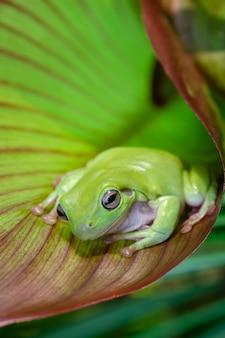 Pummeliger frosch auf einem blatt