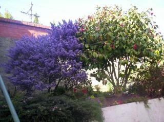 Purple haze alle in meinem gehirn