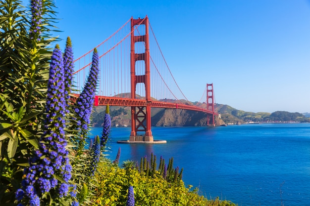 Purpur-blumen golden gate bridge san francisco kalifornien