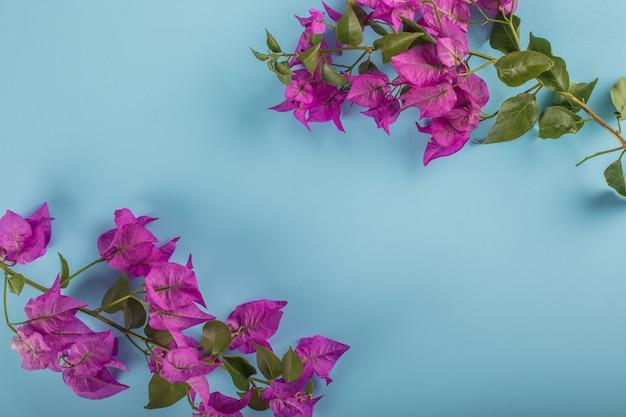 Purpurrote blume auf blauem rahmen mit kopienraum
