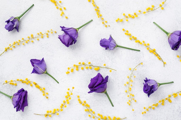 Purpurrote frühlingsblumen der draufsicht