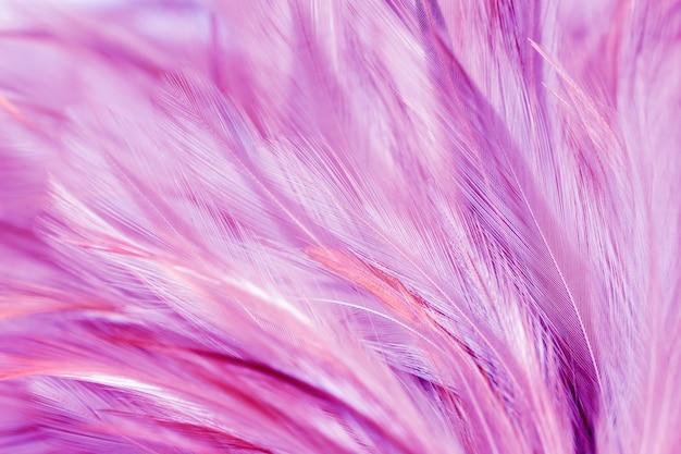 Purpurrote hühnerfedern in der weichen und unschärfeart für hintergrund