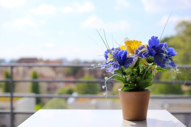 Purpurrote iris in einem topf stehen auf einer weißen tabelle nahe dem fenster