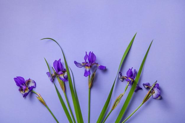 Purpurrote irisblumen auf purpur