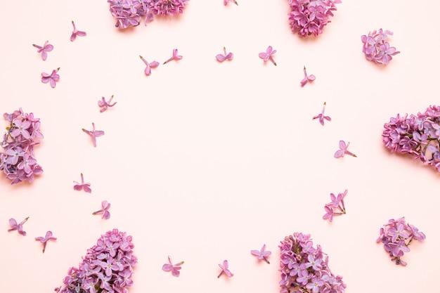 Purpurrote lila blumen der neuen niederlassungen auf rosa hintergrund.