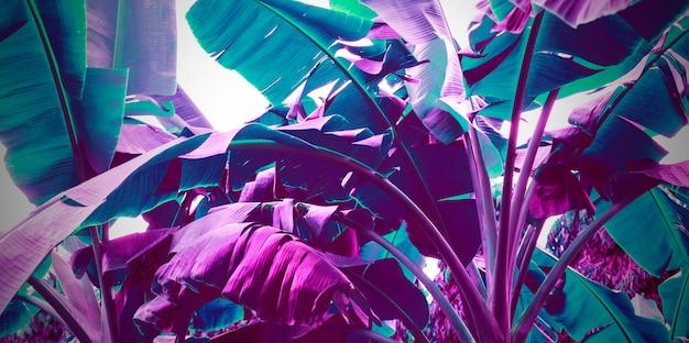 Purpurrote neonbanane verlässt abstrakten hintergrund